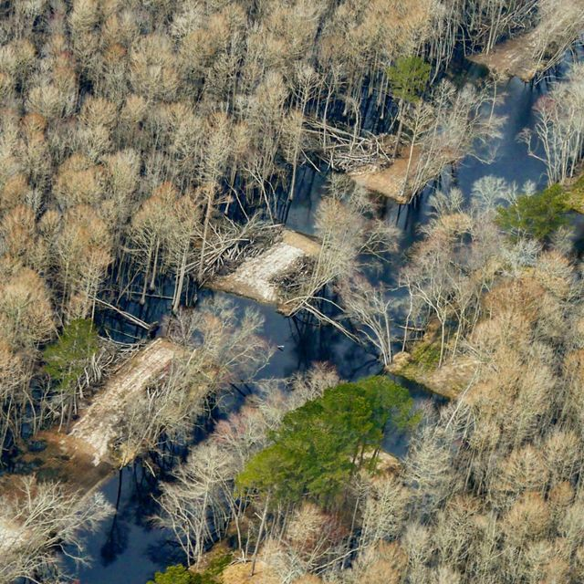 Aerial view of the Pocomoke River floodplain restoration site showing breaches cut into earthen berms to reconnect the river to its floodplain.