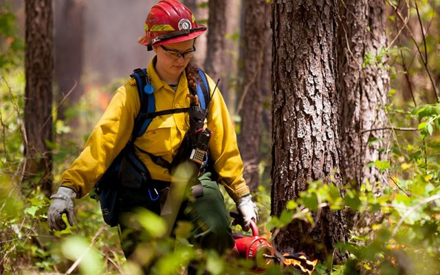 A woman wearing yellow fire retardant gear carries a drip torch through a pine forest during a controlled burn.