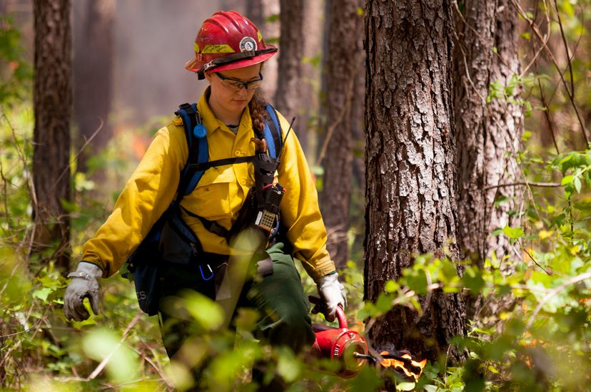 A woman uses a drip torch at a controlled burn. A woman wearing yellow fire gear and a red hard hat walks through a forest carrying red canister. Smoke rises behind her from a low fire.