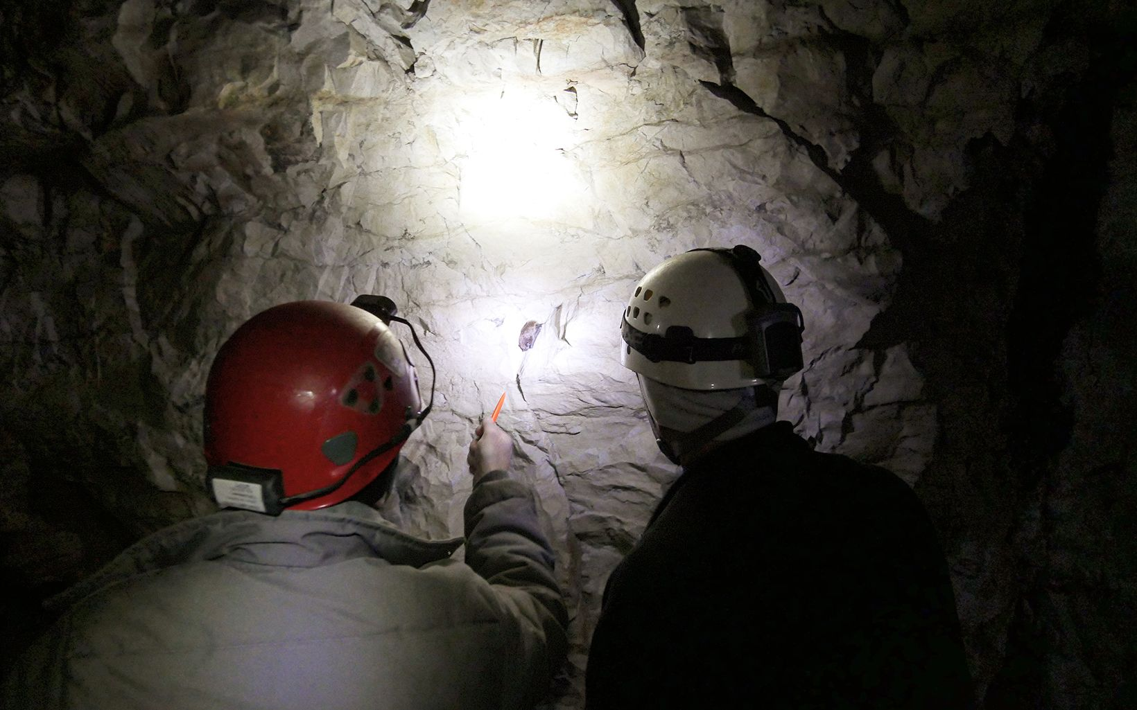 Dan and Rich examine a hibernating tricolored bat for white-nose syndrome.