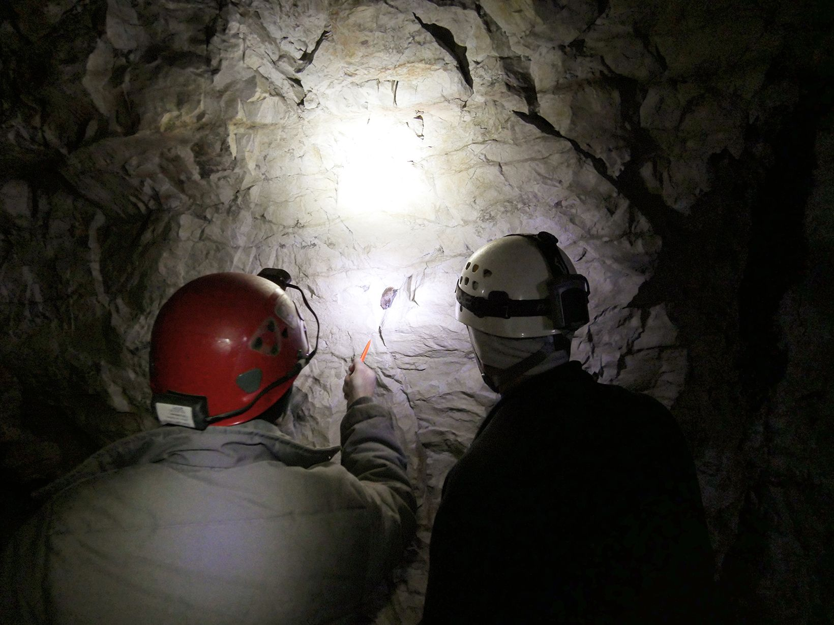 View from behind of two men observing a hibernating bat in a cave. Their hard hat lamps illuminate the small mammal clinging to the cave wall.