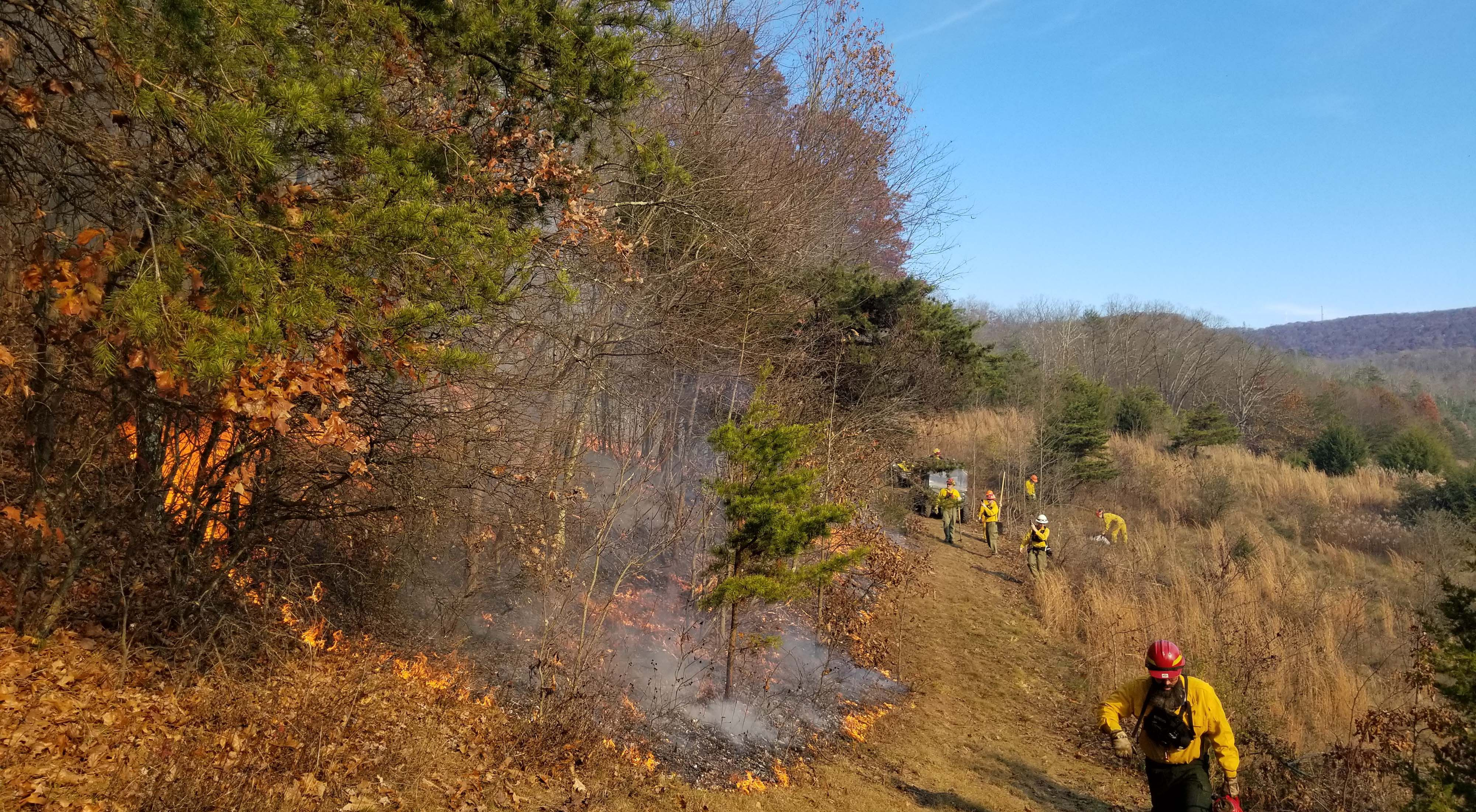 Low intensity fire moves up a wooded slope as seven members of a TNC crew monitor the fire line during a controlled burn.