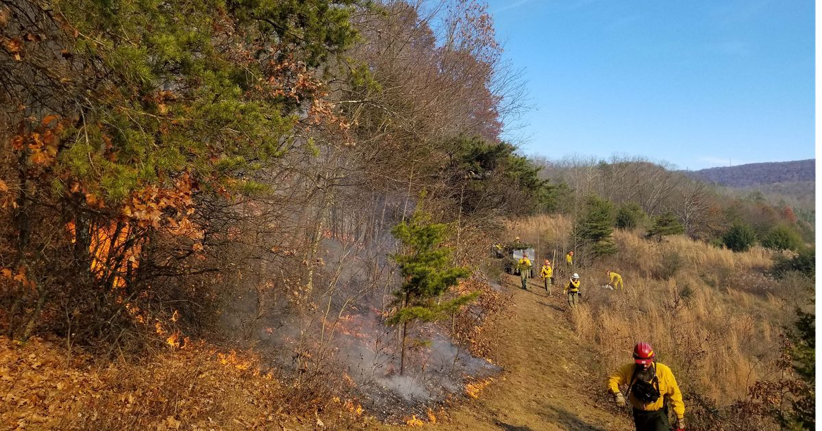 Controlled burn in an oak-hickory forest at the Sideling Hill Creek preserve, the first burn conducted at this location.