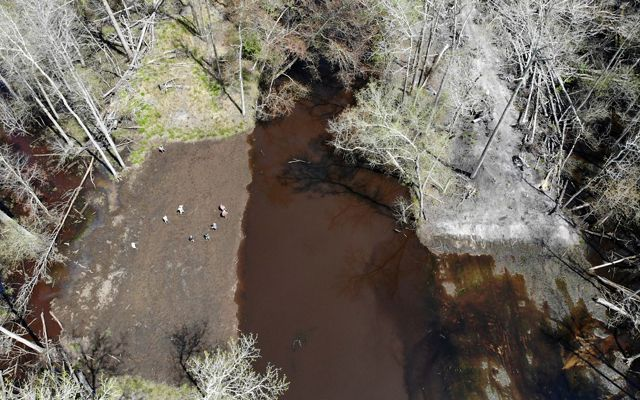 Drone view looking down on 8 people standing at the edge of a forested wetland. The water is dark brown from a recent flood.