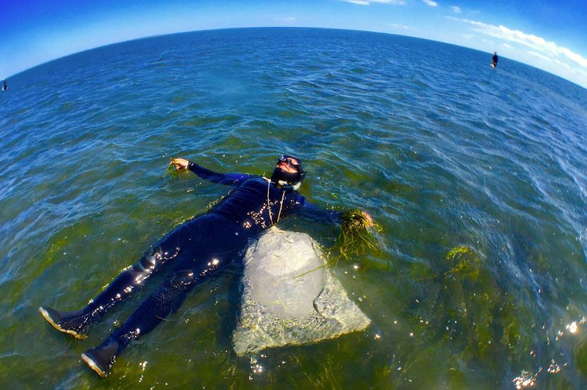 A man in a wet suit floats above a seagrass meadow in shallow water. A fish eye lens has been used, giving a curve to the horizon behind him.