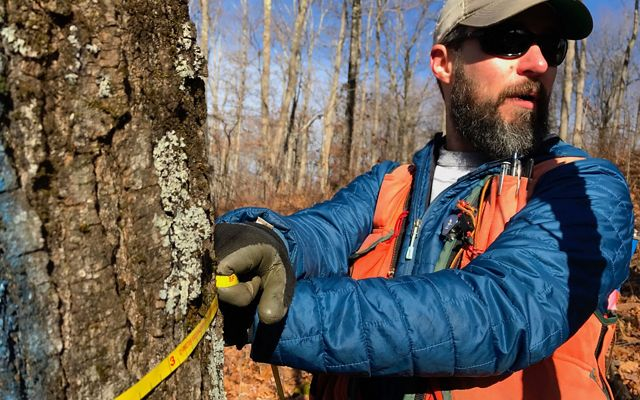 Stuart Hale measures a tree in a forest being managed for carbon sequestration through Virginia's Clinch Valley Program.