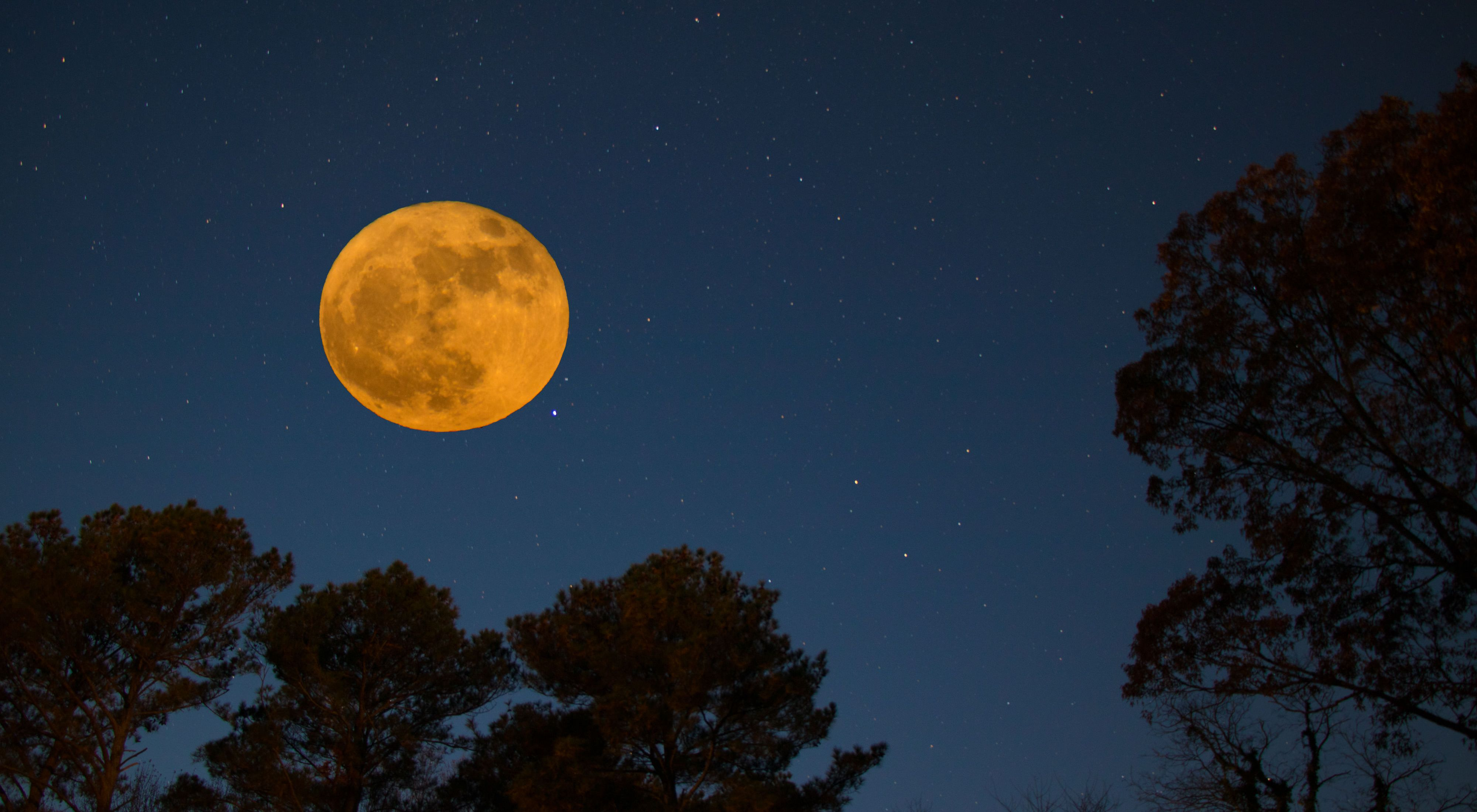 Moonrise over Brownsville Preserve. A bright, full moon in a dark sky above the silhouettes of trees.
