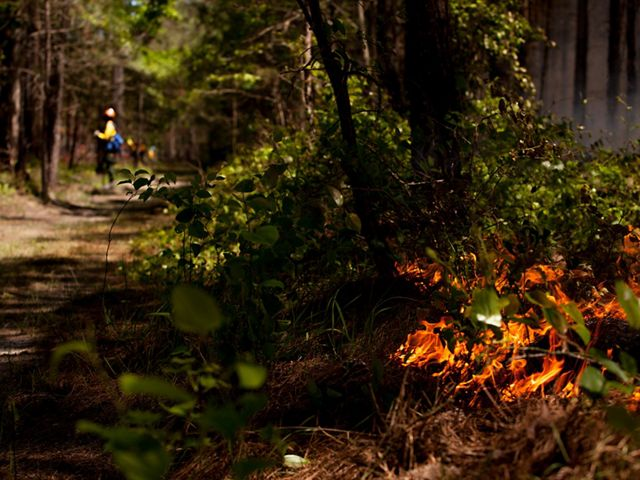 In the foreground, a low fire burns in the vegetation at the edge of a wide sandy trail that creates a fire break for a controlled burn. A person wearing yellow fire gear stands in the distance.
