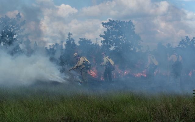 TNC fire practitioners attend a wildfire suppression training in the Deep River Forest Reserve in the Toledo distract of Belize, February 2019.
