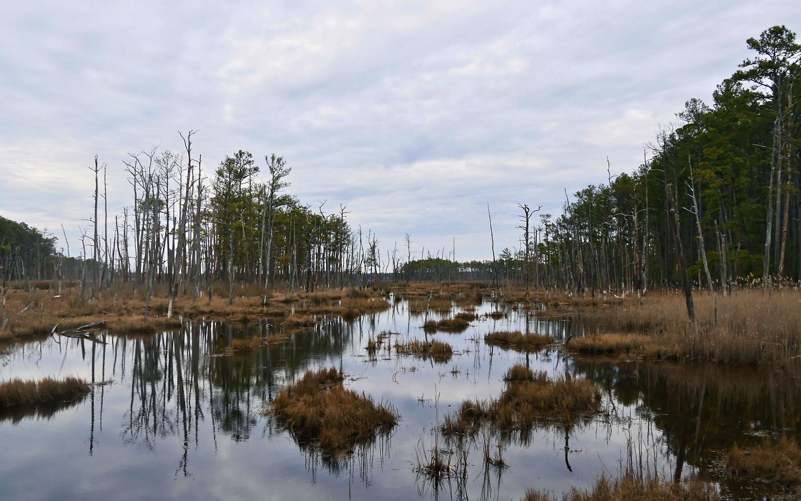 The Robinson Neck preserve on Maryland's Eastern Shore is largely comprised of brackish tidal marsh and provides a haven for many bird species.