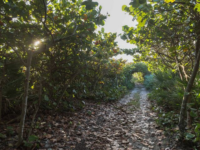 A path lined with sea grapes at Blowing Rocks Preserve on Jupiter Island, Florida where conserving it's coastal habitat has been a priority since its acquisition in 1969.