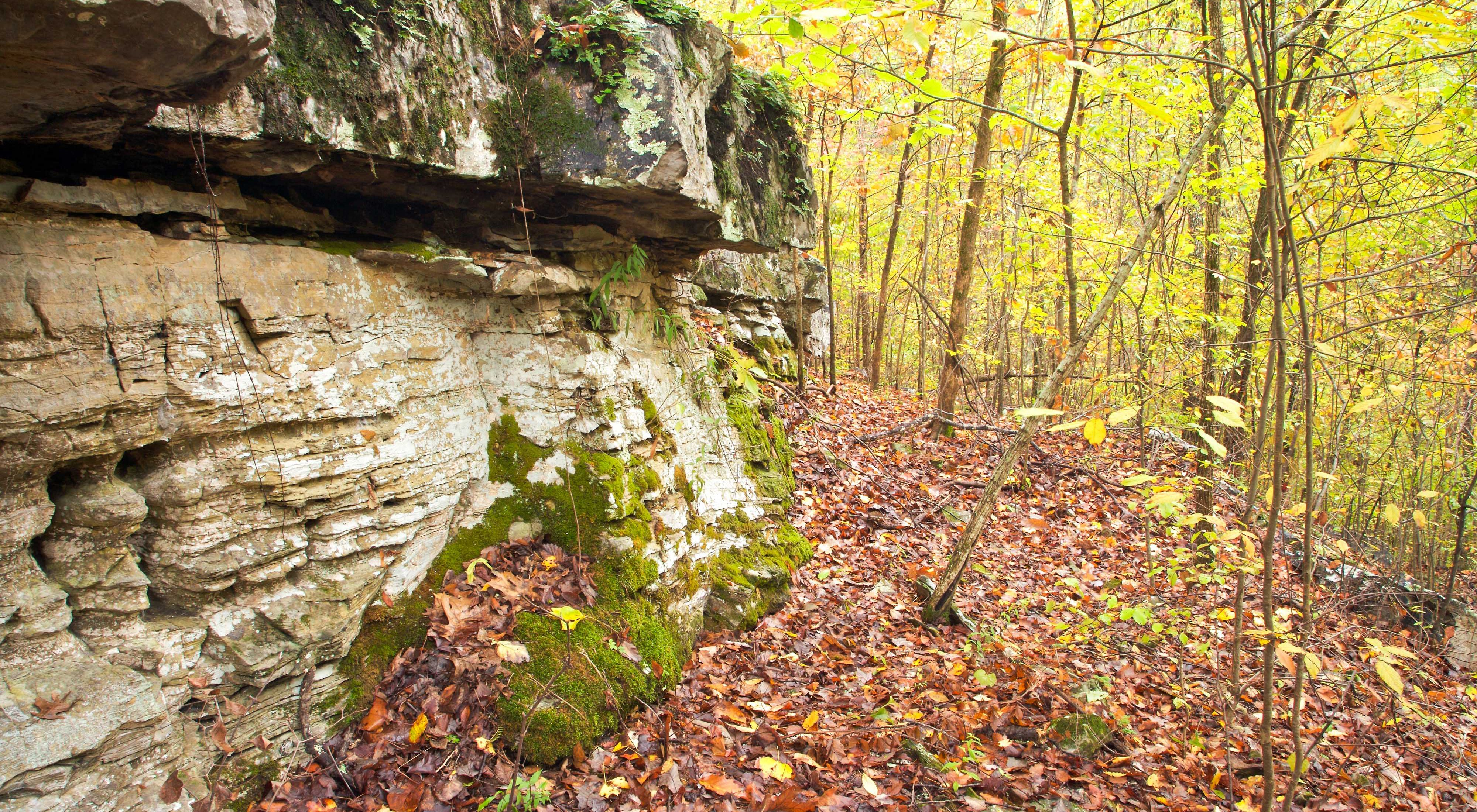 Limestone bluff and rocks in the forest at Black's Bluff Preserve, Georgia