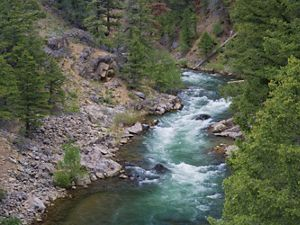 Salmon River flowing through the forest
