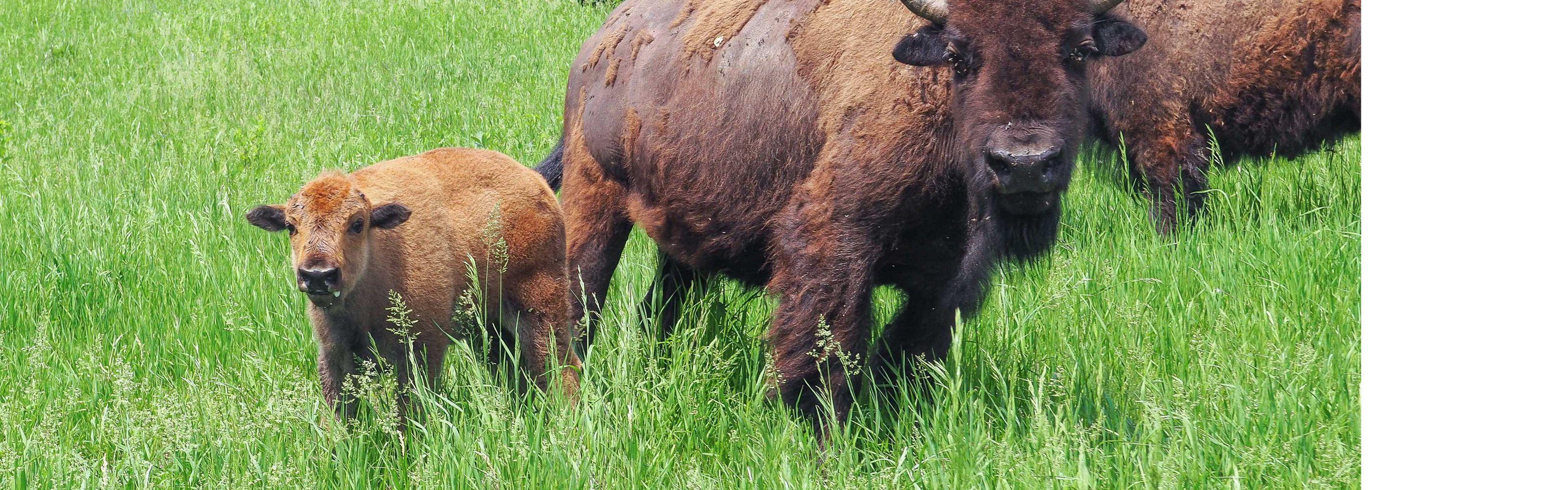on Broken Kettle Grasslands Preserve in the Loess Hills of Western Iowa.