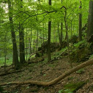 Johnsonburg Swamp Preserve