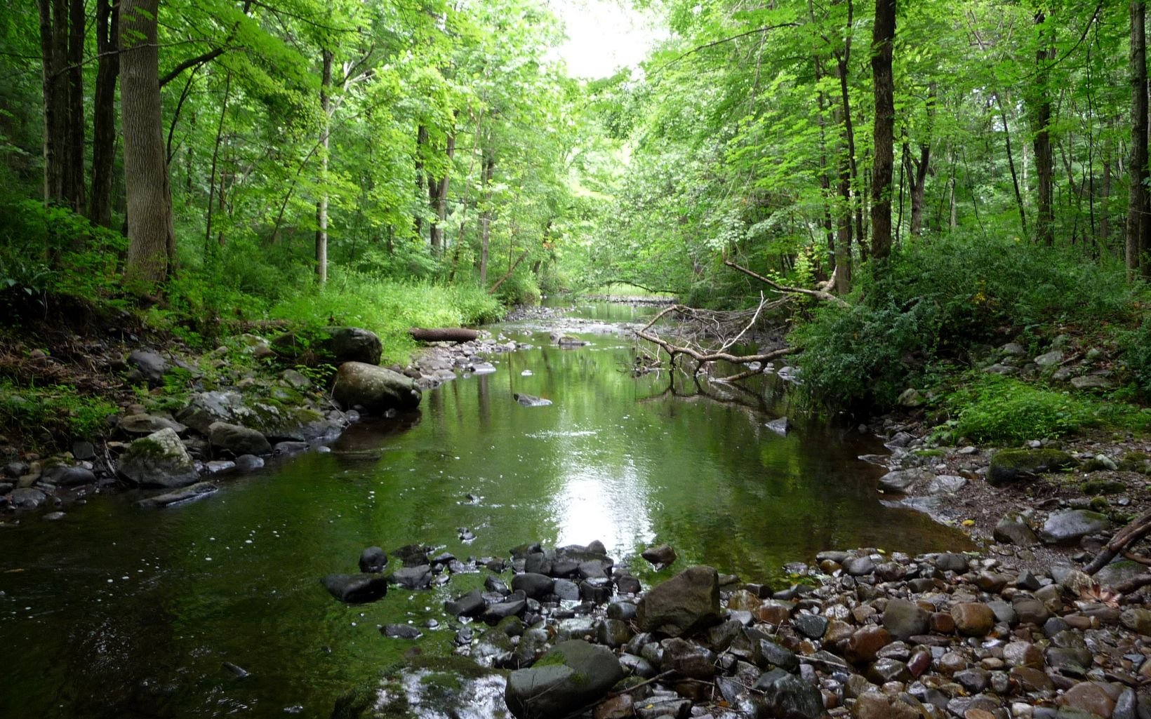 This densely-forested preserve protects streams of near pristine water quality.