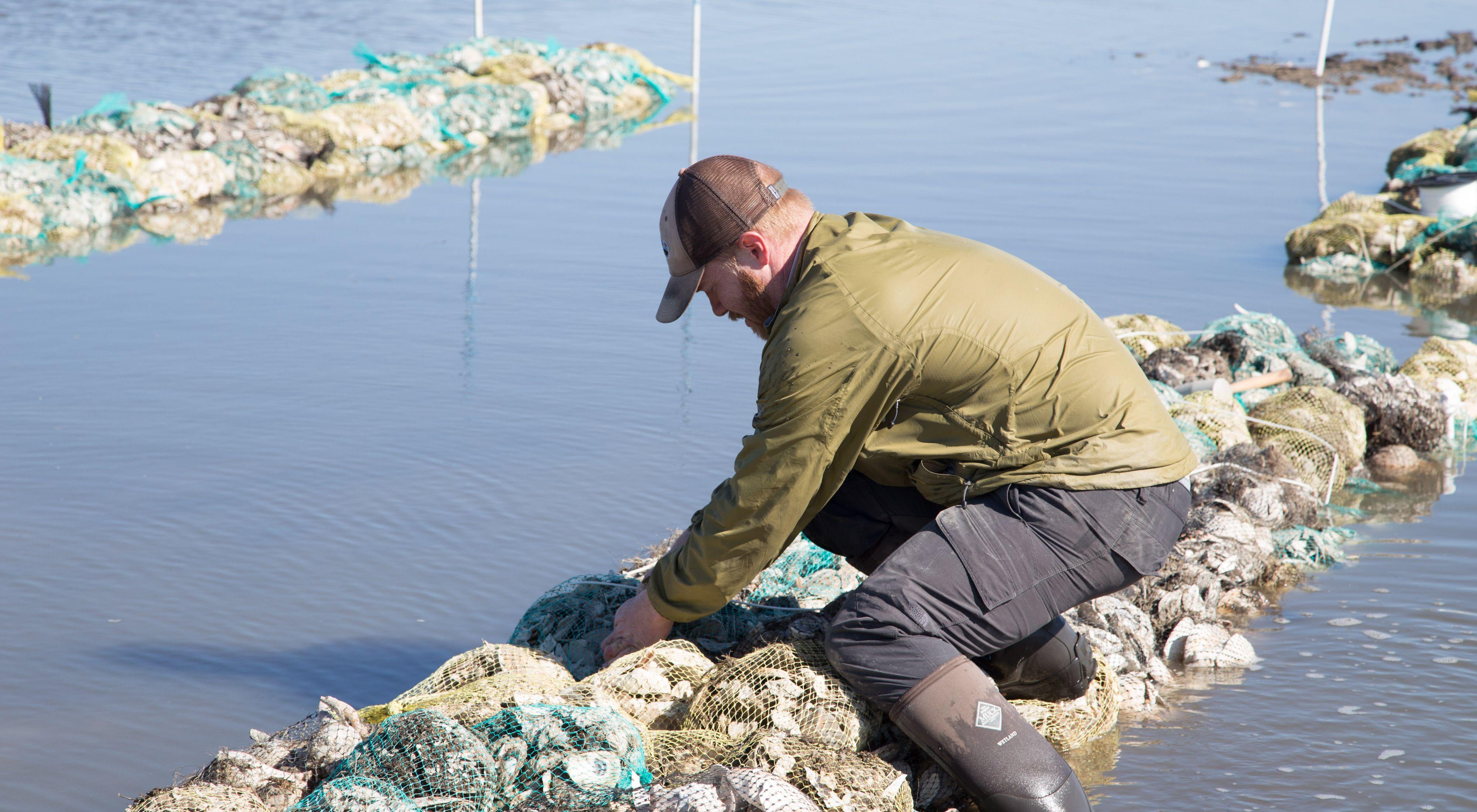 Oyster reef installation at Gandy's Beach