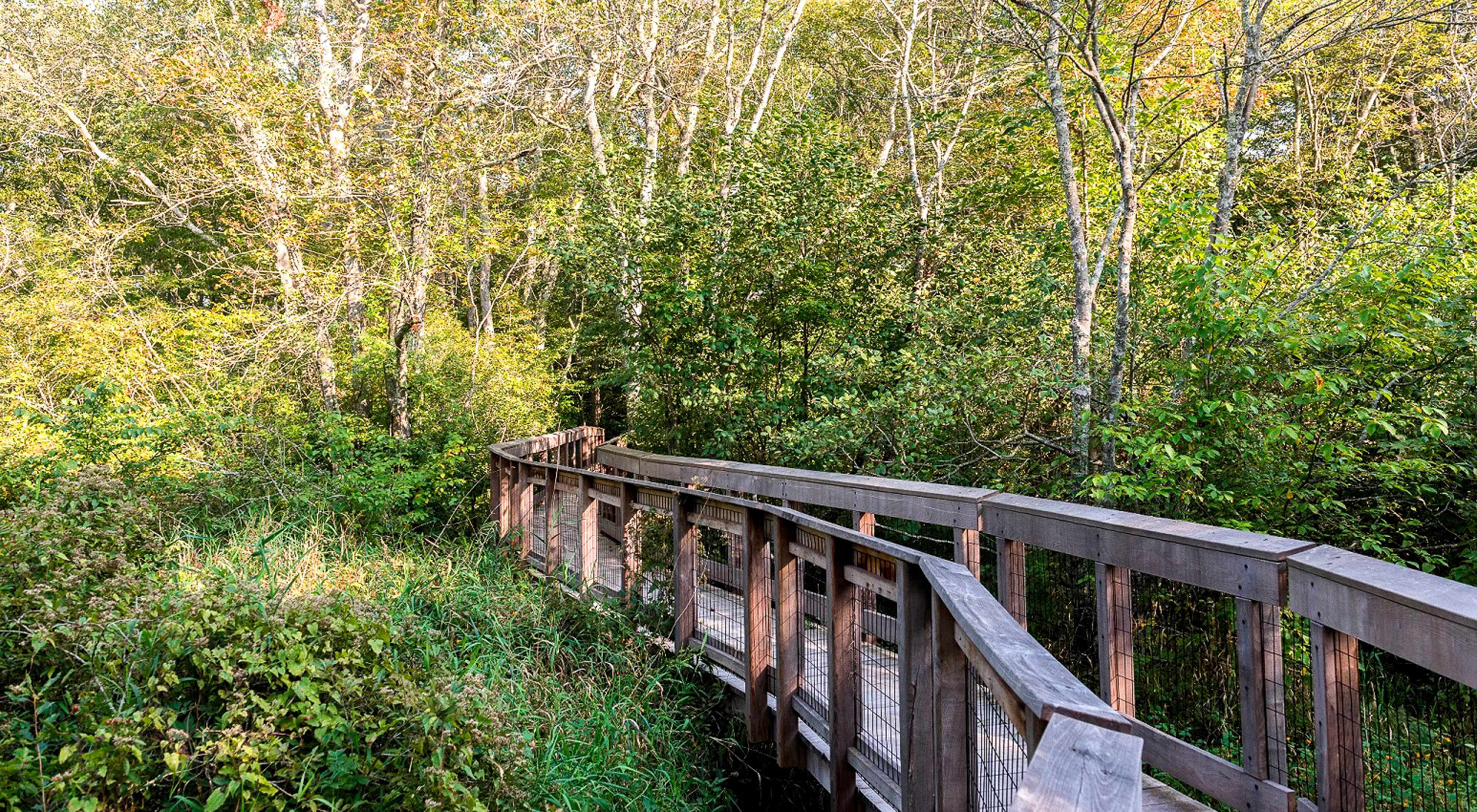 Dundery Brook trail Boardwalk
