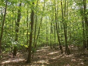 Canonchet Brook Preserve in Rhode Island