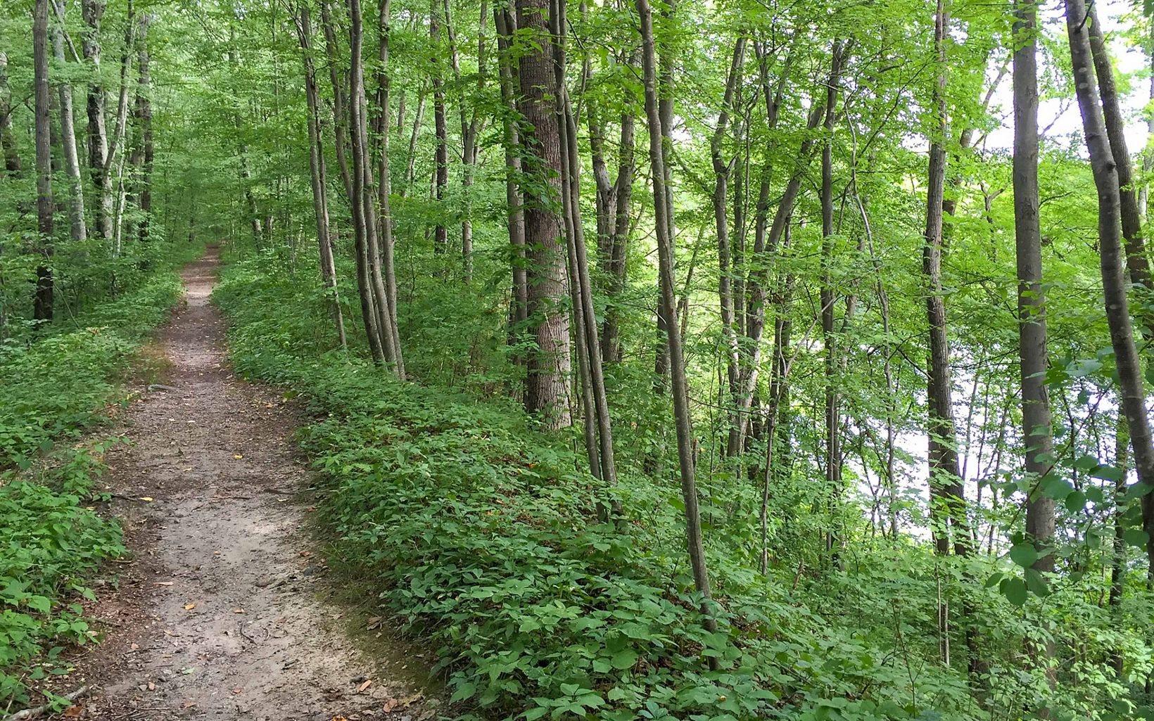 A straight, narrow trail into the forest, with the land sloping steeply to a pond at right.