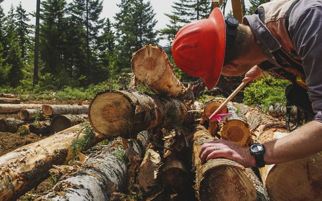 measures the diameter and length of logged trees to determine if they are the right size for processing mills.
