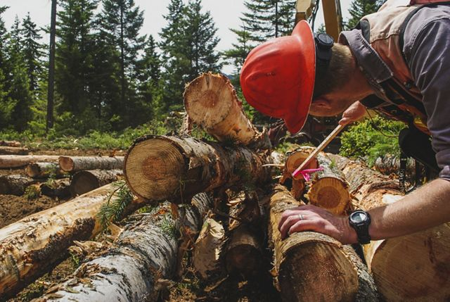 Photo of a man measuring logs for processing.