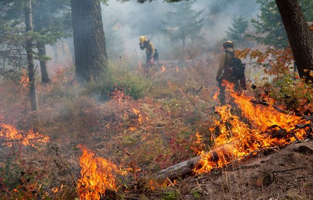 A scene from a prescribed burn on Roslyn Ridge during a prescribed fire training exchange.