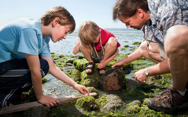 Father crouches in a tidal area with algae-covered rocks as his two sons flip a rock and look for critters.