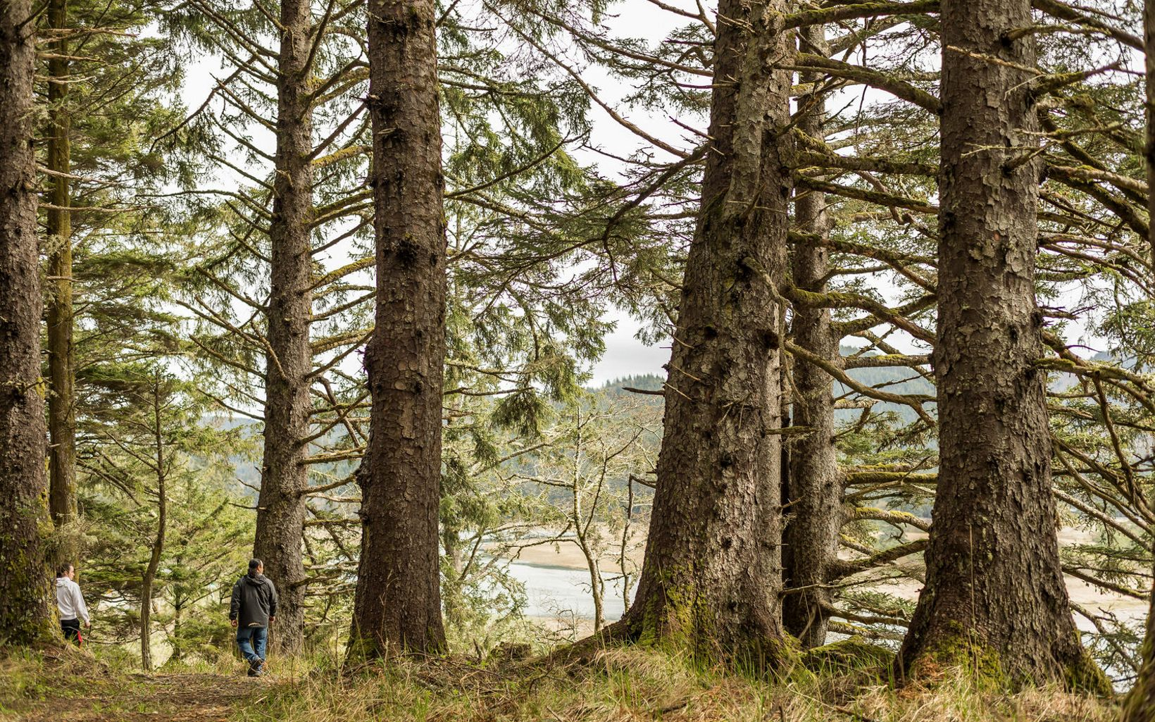 spend a morning in the old-growth Sitka spruce forests and rocky beaches within the Makah reservation in Neah Bay.