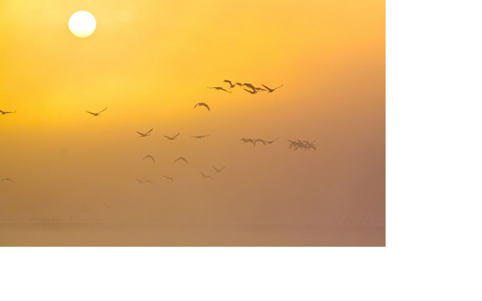 A flock takes flight in the misty morning light.