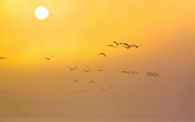 Birds flying in the distance against an orange sunrise.