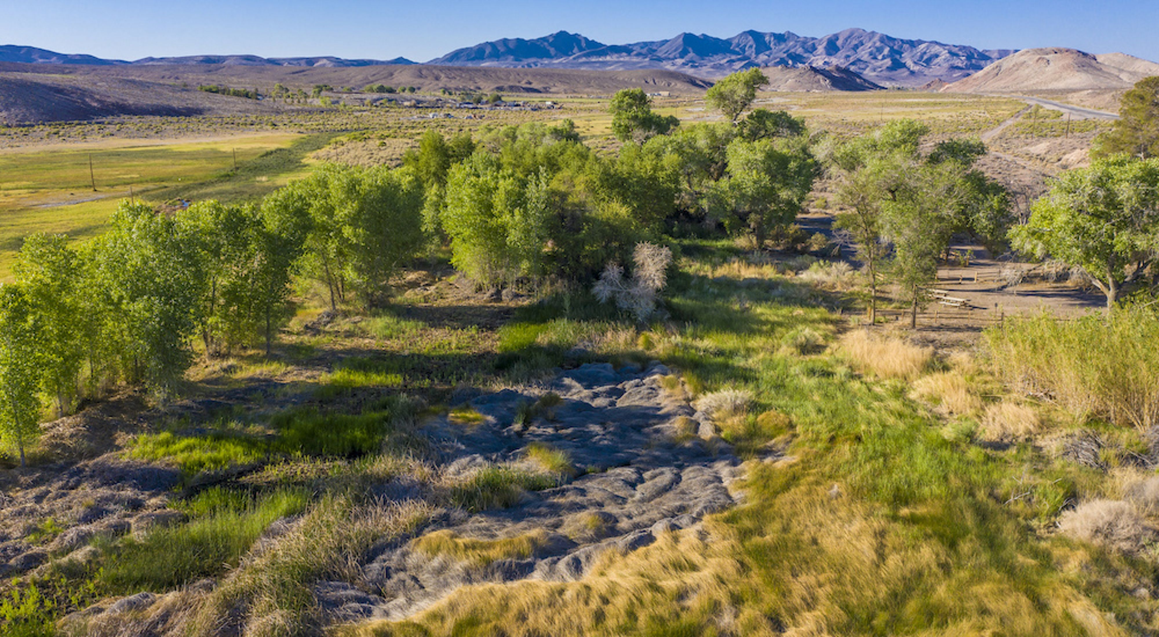 Aerial view of trees along the boardwalk at Torrance Ranch Preserve