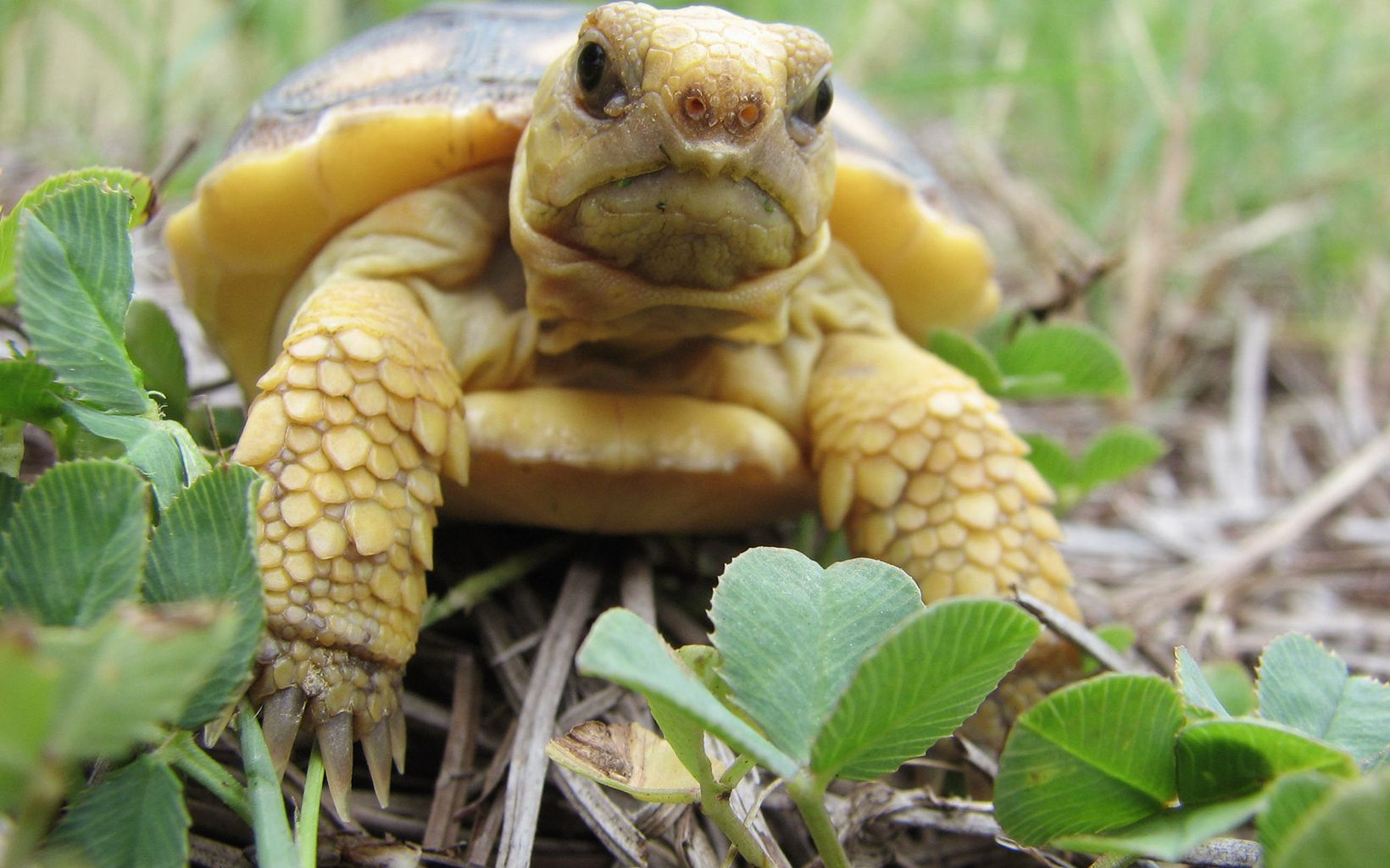 Springtime brings tiny tortoises to the Willie Farrell Brown Preserve in Mississippi.
