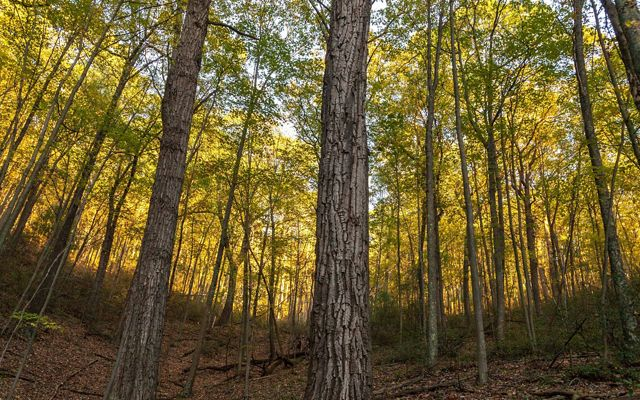 Partnering with landowners to sustainably manage their forests can increase the carbon storage of their land.