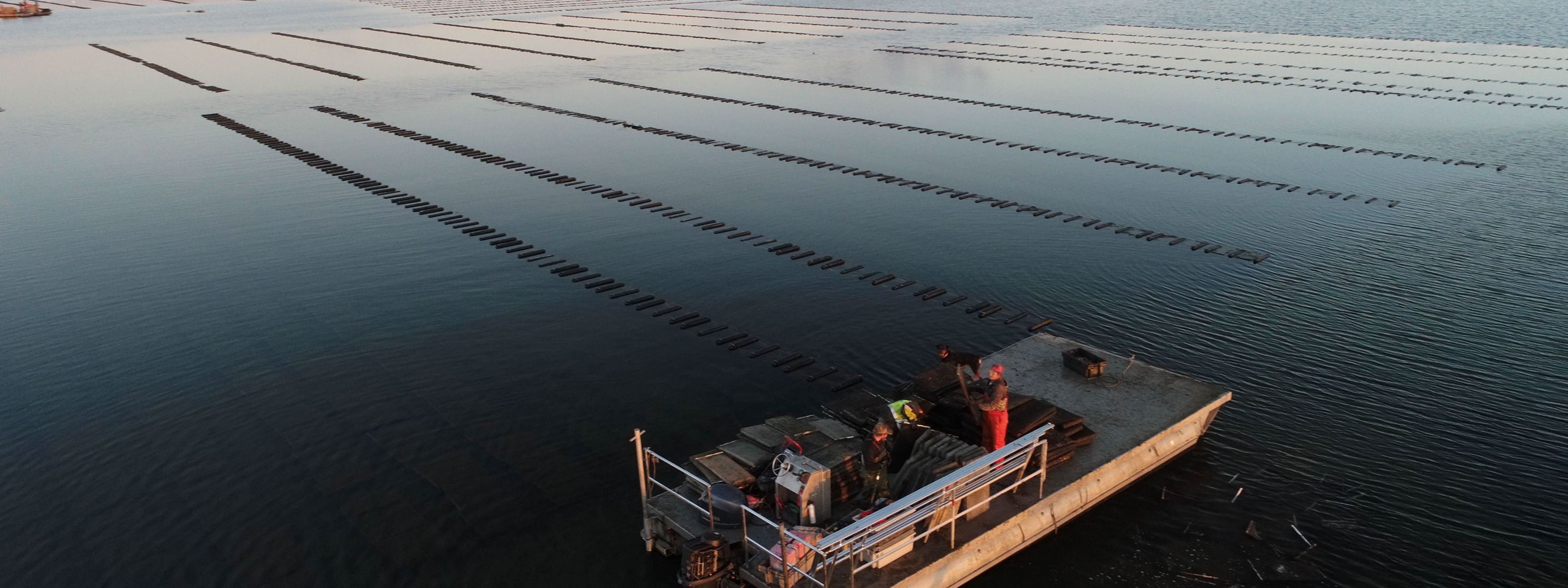 An aerial view of oyster cages and an oyster boat on the water.