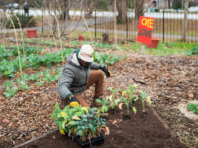 The Nature Conservancy and HABESHA, a Pan-African organization that cultivates leadership in youth and families, created the Urban Green Jobs program.