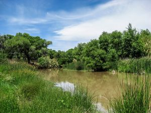 The Verde River as it passes by Hauser Farms near Camp Verde, AZ. The Hausers are important Conservancy partners in making irrigation more efficient and conserving more water.