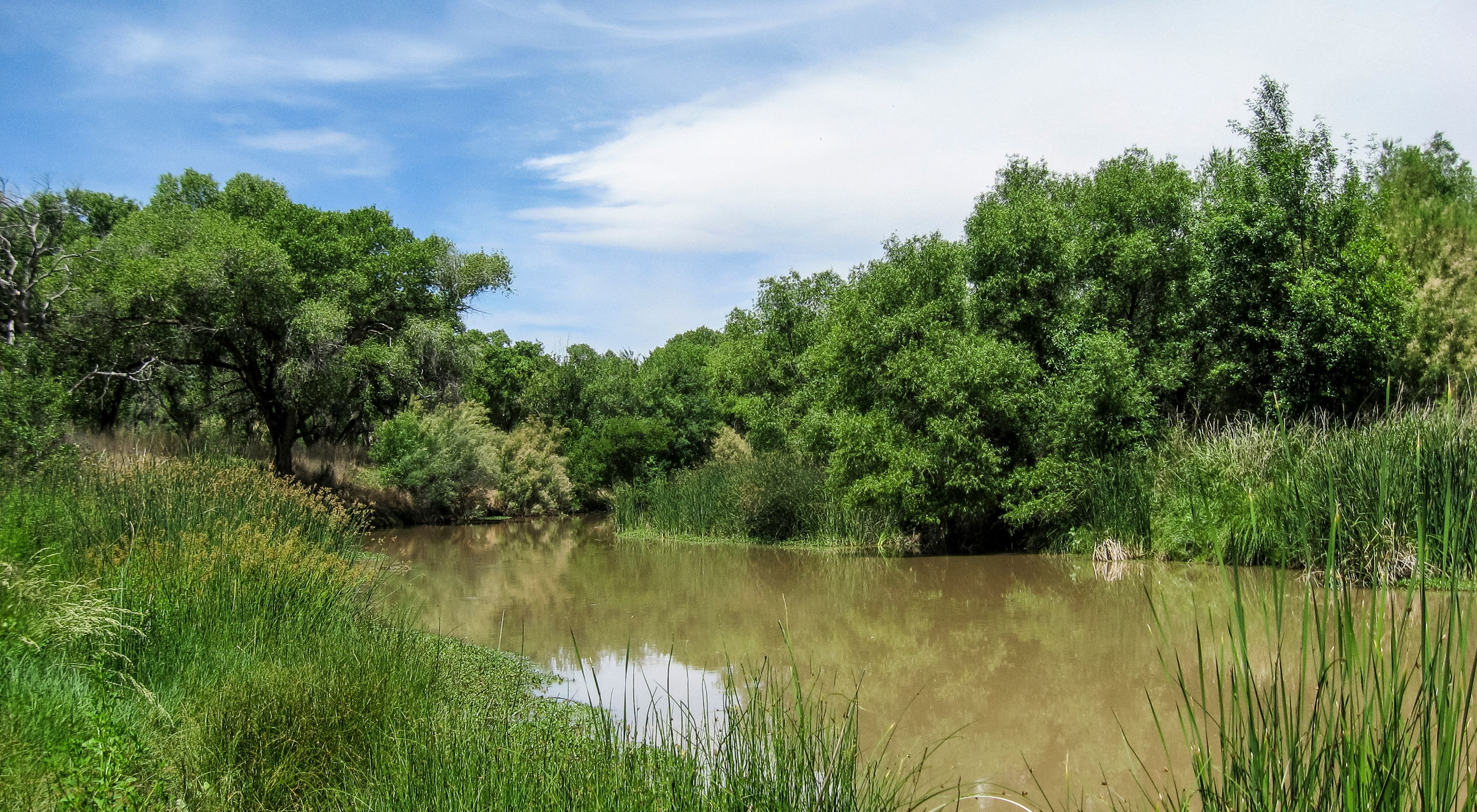 A glassy river between tree-lined banks.