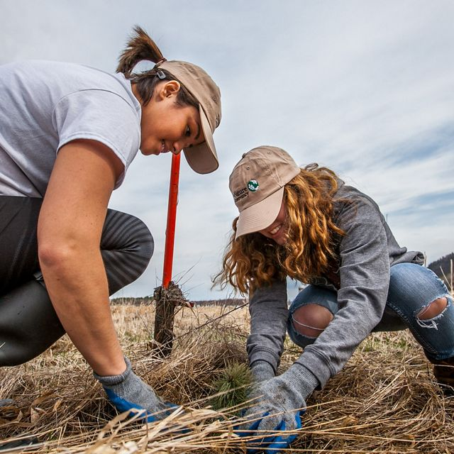 Two women planting a seedling.