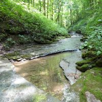 Washmorgan Hollow is a 73-acre preserve near Cookeville, featuring a rocky, forested creek that leads to a waterfall.