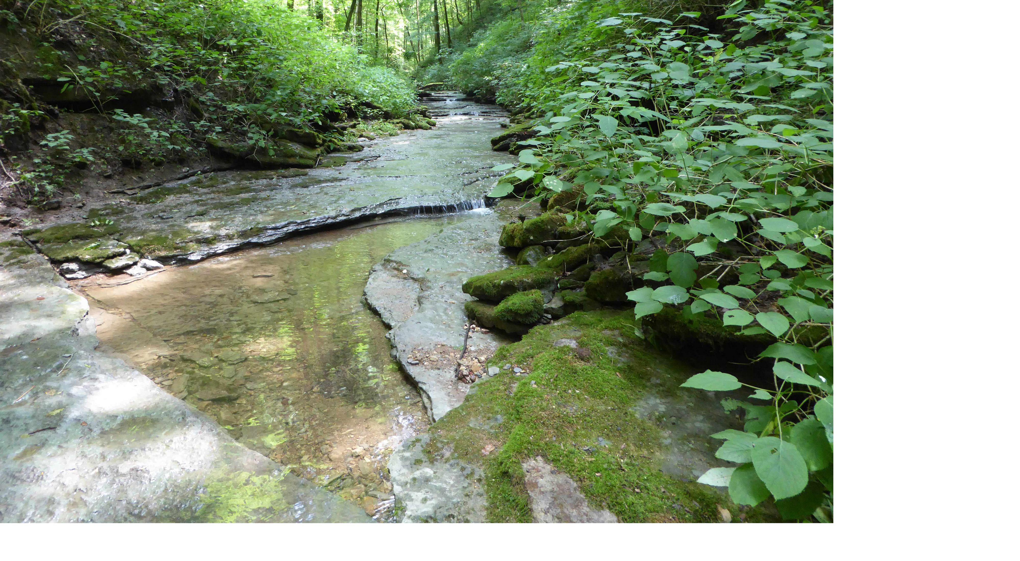 Rocky creek flowing through Washmorgan Hollow preserve.