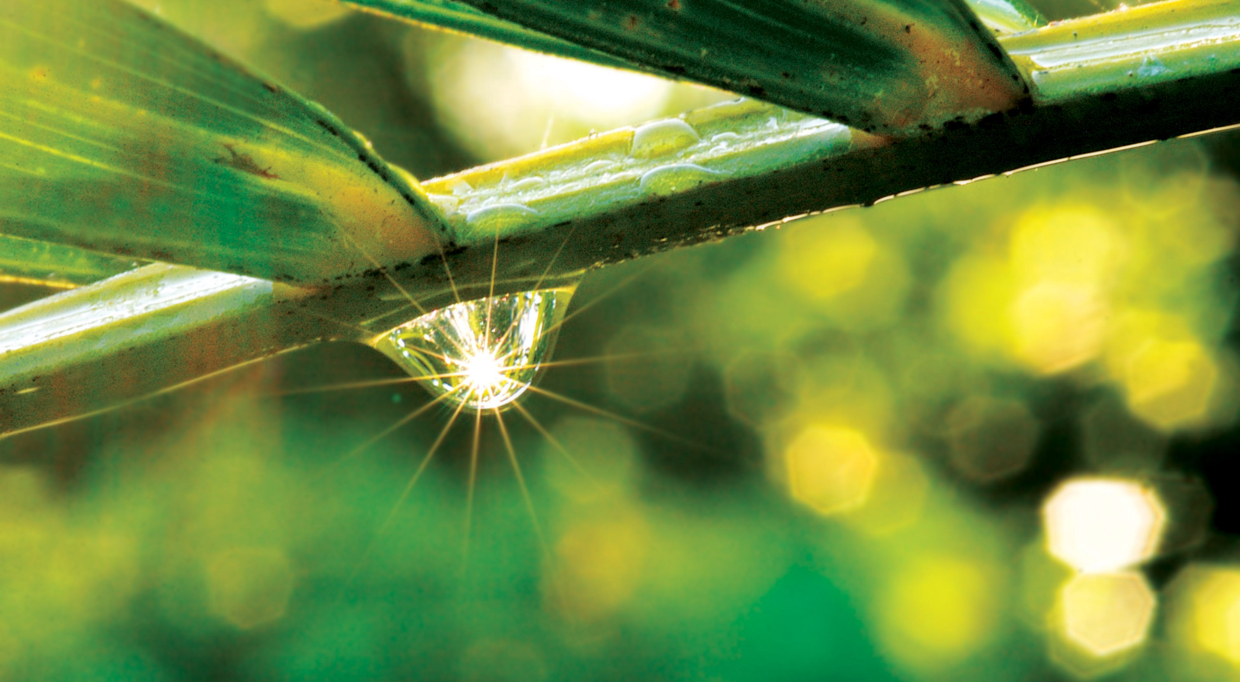 Sunlight reflected through water droplet on plant in the tropical rainforest of Costa Rica's Osa Peninsula.