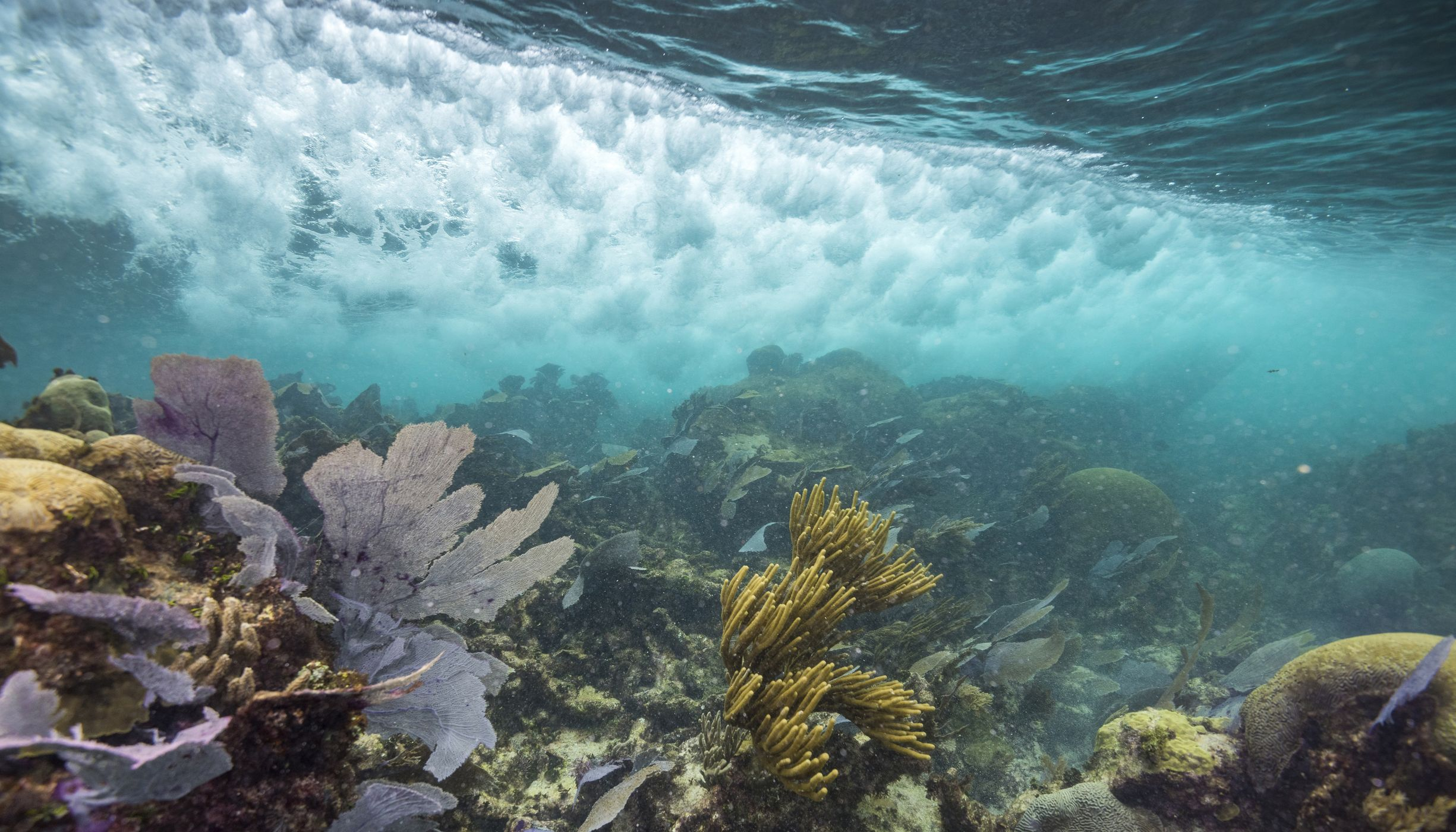 Documenting wave action along a coral reef. Healthy coral reefs help to absorb wave impact along shores which in turn helps to prevent beach erosion.