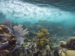 Healthy coral reefs help to absorb wave impact along shores, which in turn helps to prevent beach erosion.