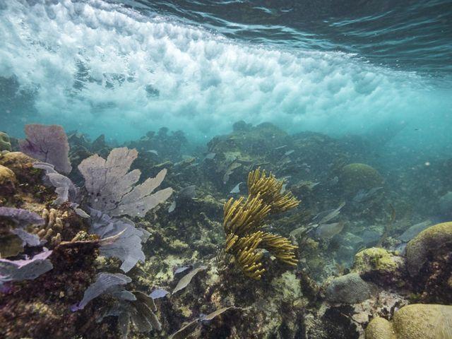 Coral underneath waves
