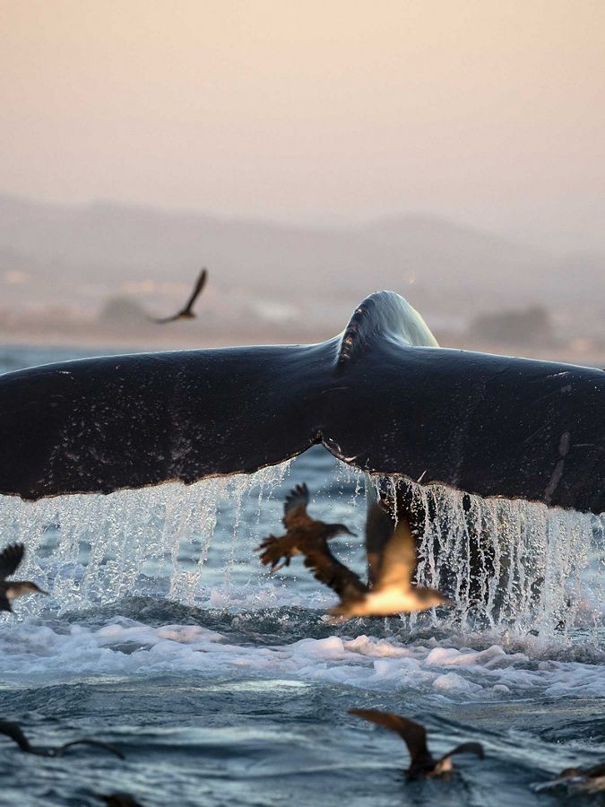 Whale tail out of water.