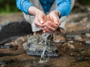 Woman's hands scooping water from a stream.
