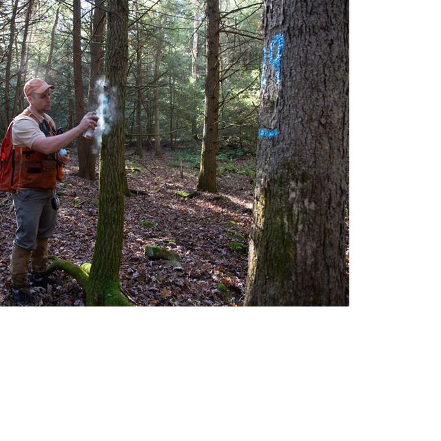 Mike Eckley, a TNC forest scientist, measures trees and marks  trees in Lock Haven, Pennsylvania, as part of TNC's Working Woodlands program.
