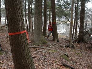 A person ties red ribbon around trees in a forest.