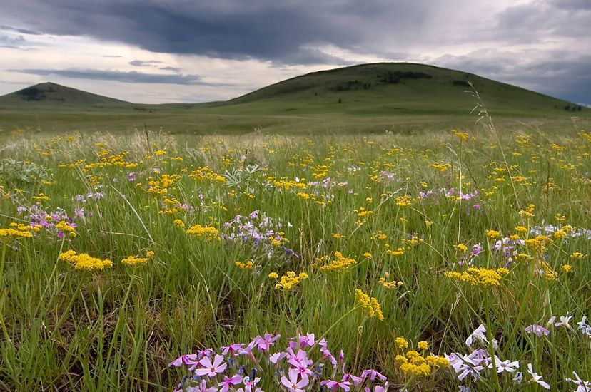 A lush, green and wild meadow with vibrant wildflowers.